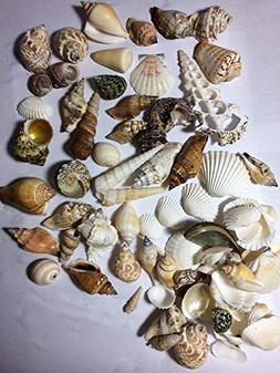 Premium Mixed Seashell Assortment for All Your Beautiful Cra